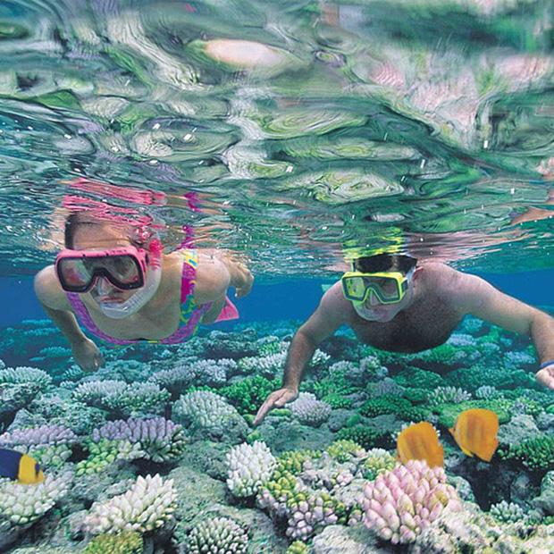 Đến Nha Trang thỏa sức chiêm ngưỡng san hô tuyệt đẹp - ảnh 1